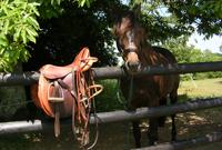 Equitation - Attelages