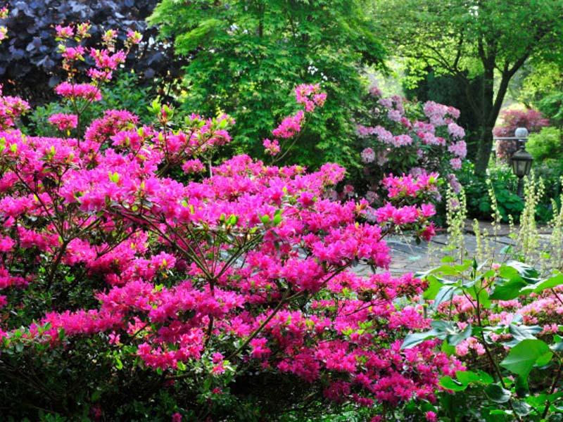 Le jardin du ridrel la fert mac en normandie cdt de l 39 orne for Jardin jardinier normandie
