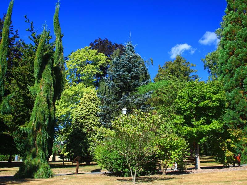Arboretum - Bagnoles de l'Orne