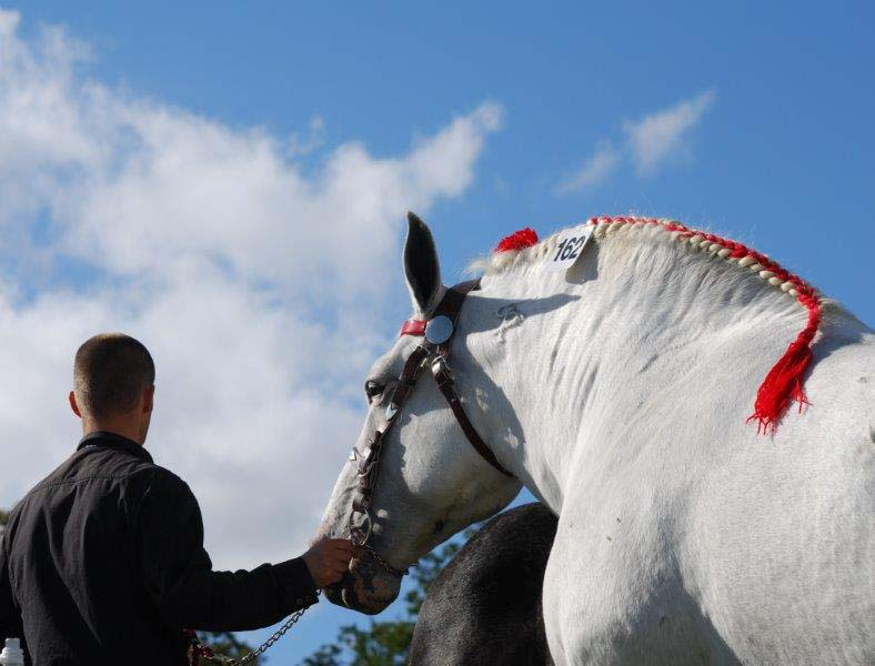 Championnat de France du Percheron - Le Pin au Haras