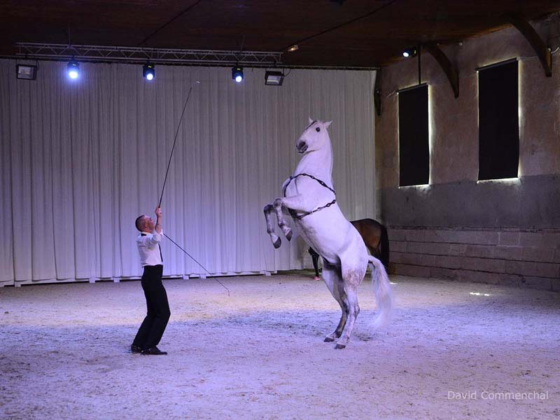 Spectacle équestre - Haras national du Pin