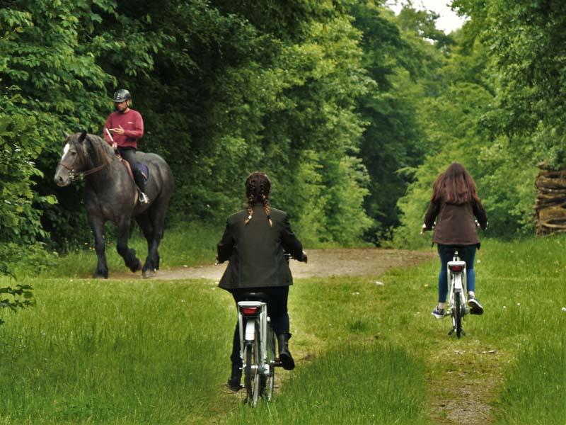 Location de vélos au Haras du Pin